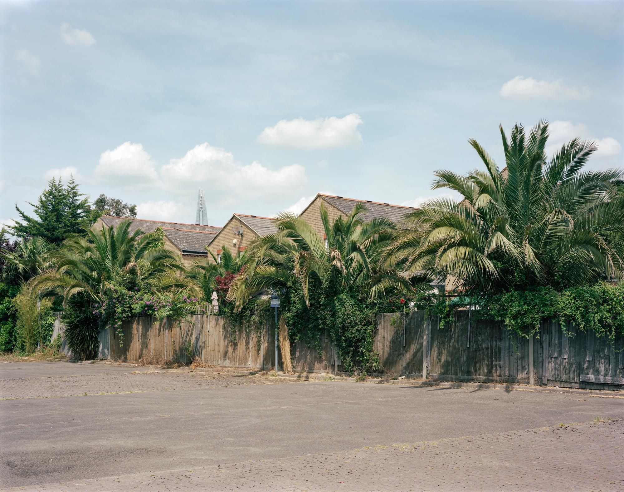 Domestic Tropicality - Tudor Prisăcariu