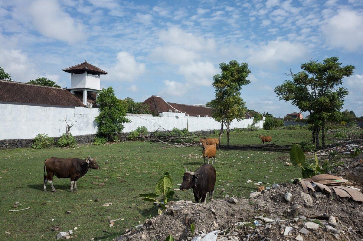 Bali - Tudor Prisăcariu